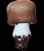 Agaricus Mushroom Home Desert Forest